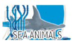 Sea Animalsシリーズ