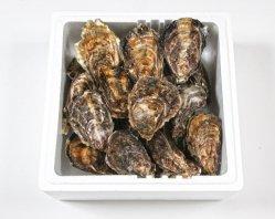 殻つき牡蠣(20個入り)