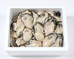 今が旬!生牡蠣(むき身) 1.5Kg