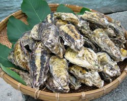 牡蠣 殻つき 8kサイズバケツ1杯分(中〜大約30〜40個位)