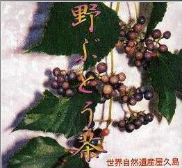 ≪野ぶどう茶45g2袋≫=屋久島産