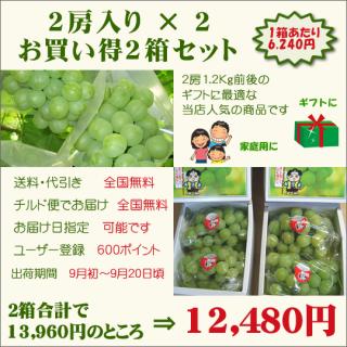 桃太郎ぶどう2房入り お買い得2箱セット(送料・代引き・チルド便・無料)