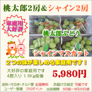 桃太郎&シャイン家庭用4房入り(送料・代引き無料)