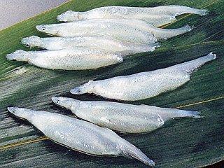 冷凍子持ち白魚IQF 《冷凍》