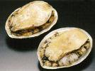 生冷エゾアワビ(殻付) 《冷凍》