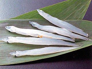 冷凍白魚IQF(8-10) 《冷凍》