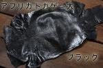 アフリカトカゲ L ブラック