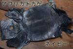 アフリカトカゲ L ネイビー