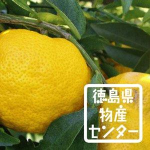 ゆず姫500ml 徳島の地酒 柚子を使ったリキュール詳細画像
