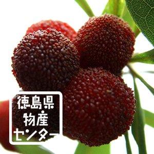 やまもも姫180ml 徳島の地酒 無農薬ヤマモモ使用のリキュール詳細画像