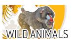 Wild Animalsシリーズ