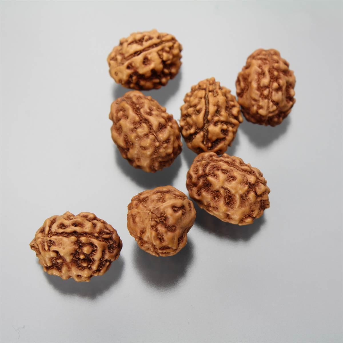 ルドラークシャ・ビーズ 3面(ジャワ産、ラージサイズ)
