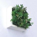 【グリーンフレーム】芝生3 グリーンミックス 15センチ  ホワイト