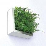 【グリーンフレーム】芝生3 ユーカリミックス 15センチ ホワイト