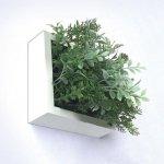 【グリーンフレーム】芝生3 ハーブミックス 15センチ ホワイト
