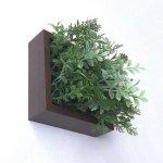 【グリーンフレーム】芝生3 ハーブミックス 15センチ ブラウン