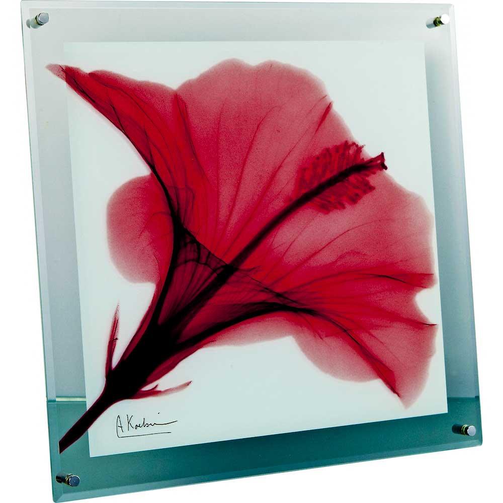【レントゲンアート】X RAY ガラス アート「レッド ハイビスカス(Lサイズ)」