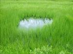 《アートフォト》尾瀬ヶ原の丸池(レンタル対象)