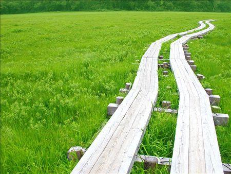 《アートフォト》尾瀬ヶ原湿原の木道(レンタル対象)