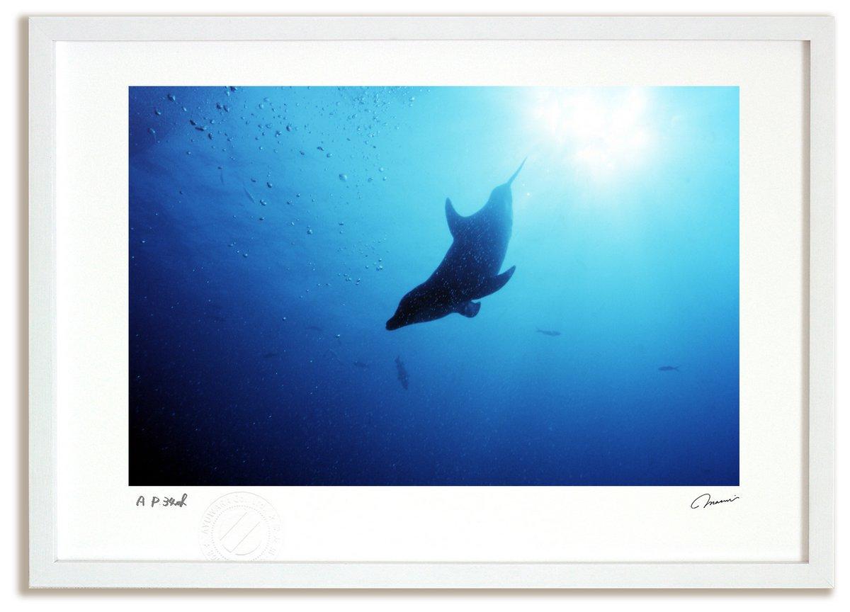 《アートフォト》ホンジュラス イルカと太陽(レンタル対象)