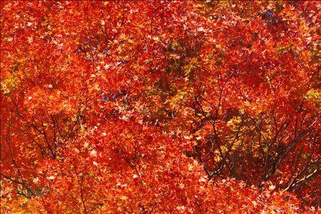 《アートフォト》真っ赤に萌える 八ヶ岳(レンタル対象)