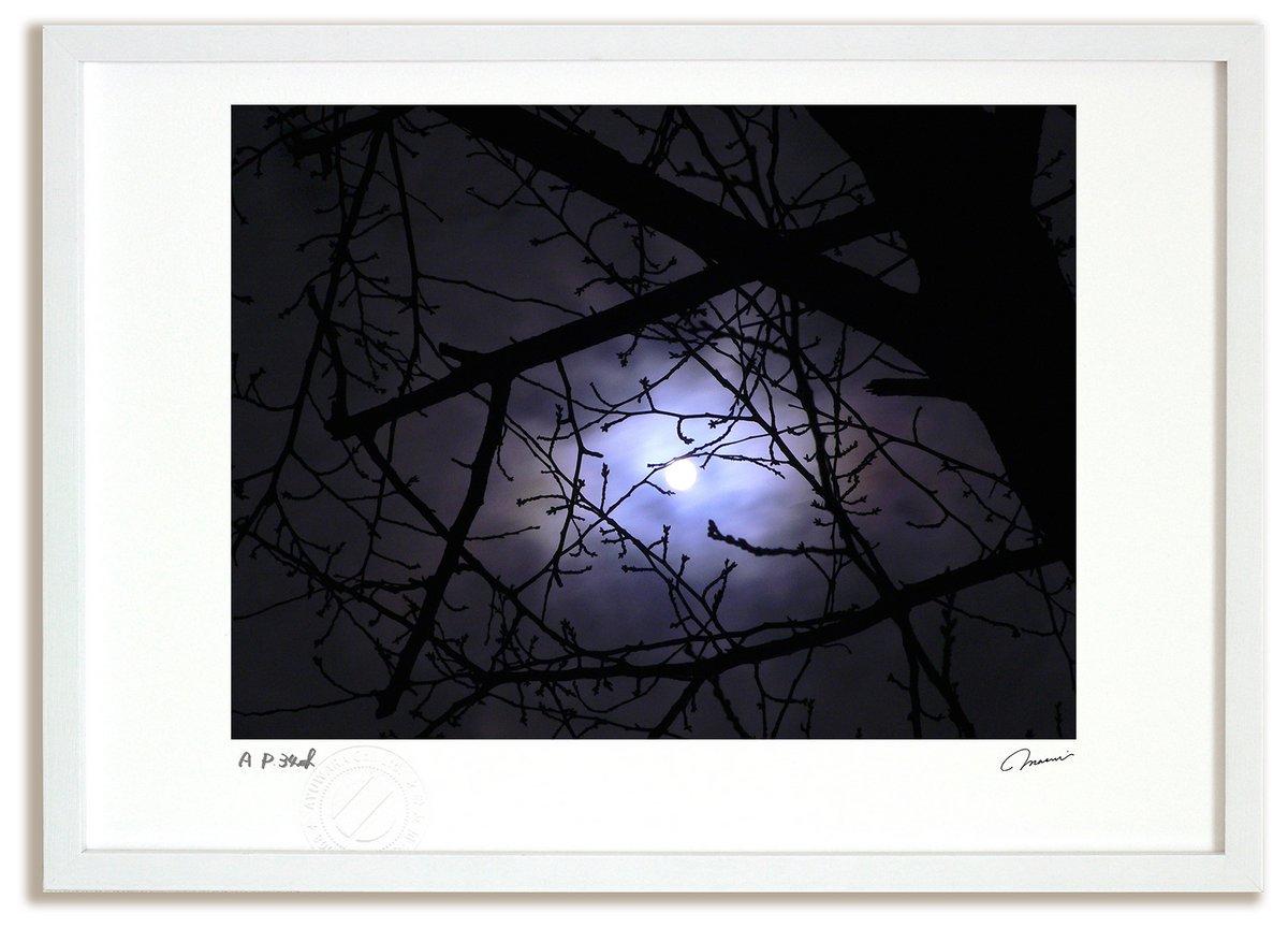 《アートフォト》冬のおぼろ月夜と桜の枝(レンタル対象)
