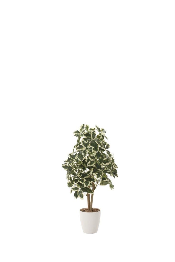 【光触媒観葉植物】斑入りシェフレラ90〔フロアタイプ(ミドルサイズ)〕