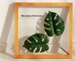 《リーフパネル》Forest Deco Monstera Deliciosa2(モンステラ デリシオサ)ナチュラルフレーム