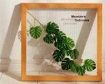 《リーフパネル》Forest Deco Monstera Deliciosa3(モンステラ デリシオサ)ナチュラルフレーム