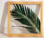 《リーフパネル》Forest Deco Elaeis Guineensis(ギニアアブラヤシ)ナチュラルフレーム