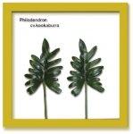 《リーフパネル》Forest Deco Philodendron cv.kookabura(フィロデンドロン クッカバラ)ナチュラルフレーム