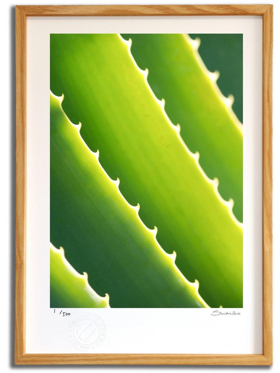 【版画 絵画】カクタスアート1(スミコ スコット)/インテリア 壁掛け 額入り アート アートパネル アートフレ…
