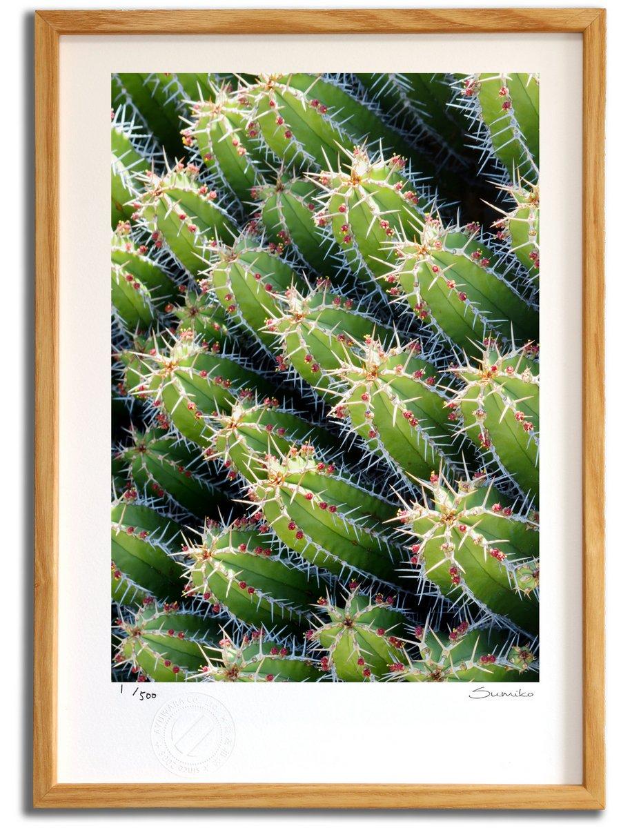 【版画 絵画】カクタスアート8(スミコ スコット)/インテリア 壁掛け 額入り アート アートパネル アートフレ…