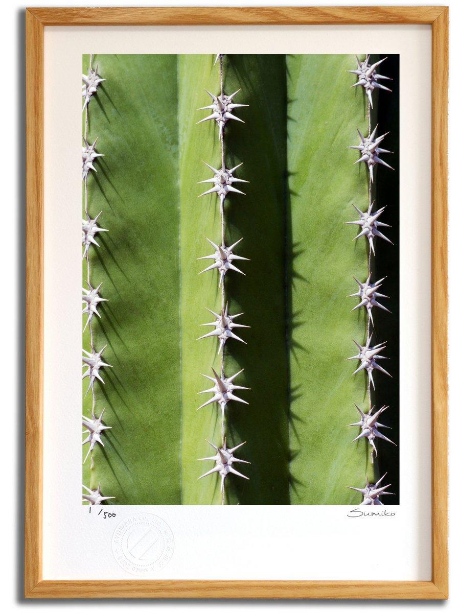 【版画 絵画】カクタスアート9(スミコ スコット)/インテリア 壁掛け 額入り アート アートパネル アートフレ…