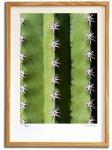 【版画 絵画】カクタスアート9(スミコ スコット)/インテリア 壁掛け 額入り アート アートパネル アートフレーム