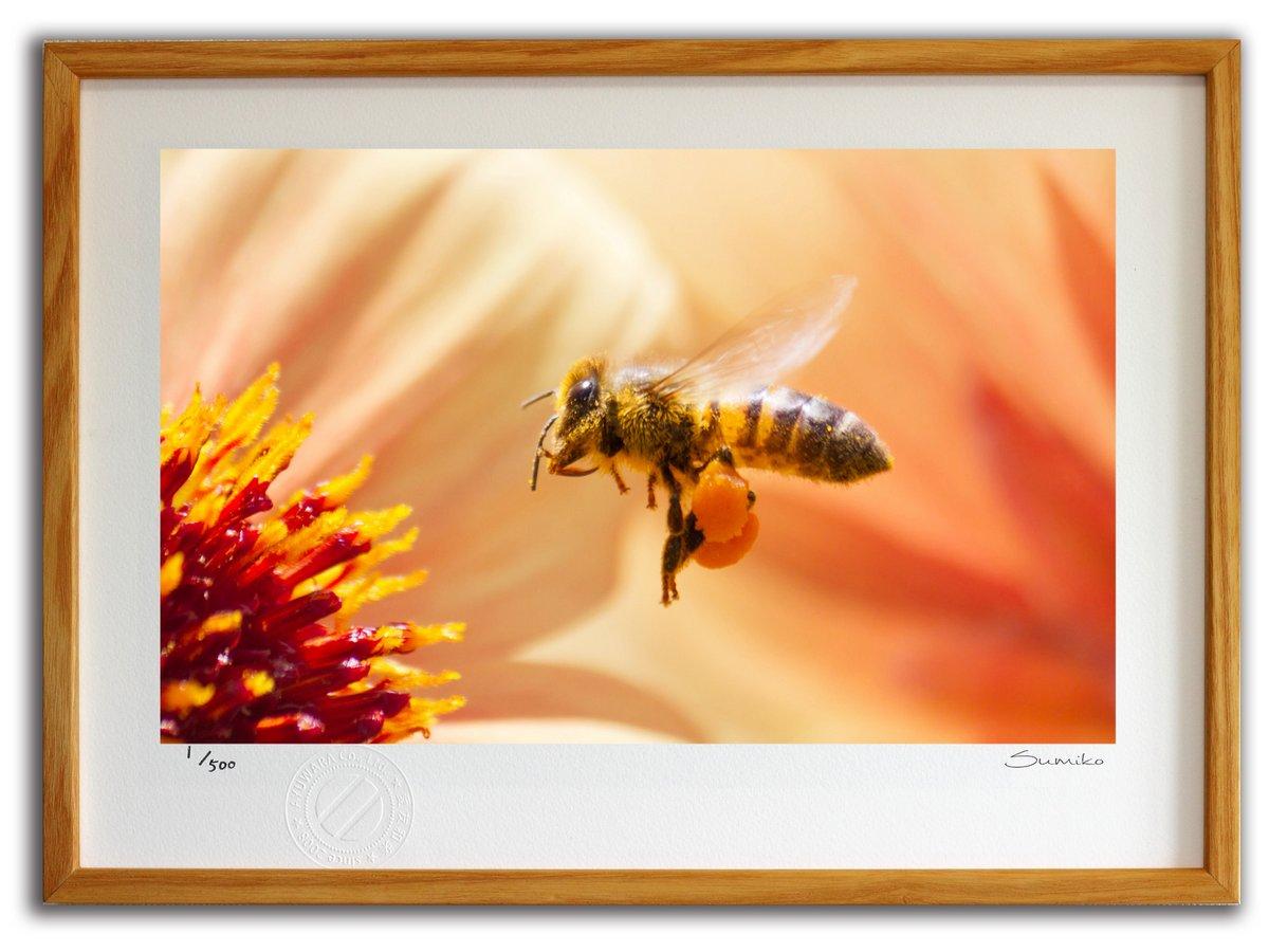 【版画 絵画】ミツバチとダリア1(スミコ スコット)/インテリア 壁掛け 額入り アート アートパネル アートフレーム