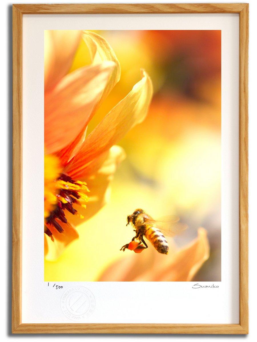 【版画 絵画】ミツバチとダリア2(スミコ スコット)/インテリア 壁掛け 額入り アート アートパネル アートフレーム