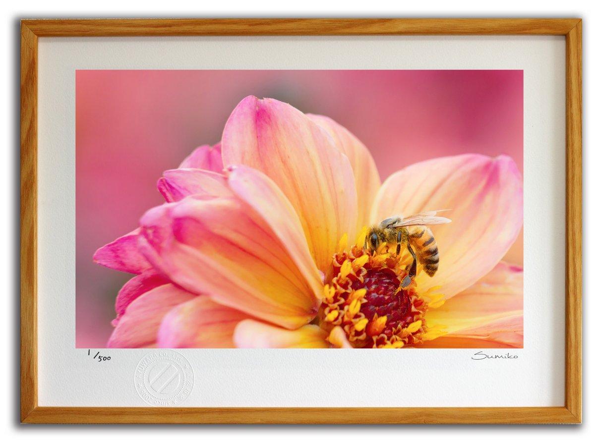 【版画 絵画】ミツバチとダリア3(スミコ スコット)/インテリア 壁掛け 額入り アート アートパネル アートフレ…
