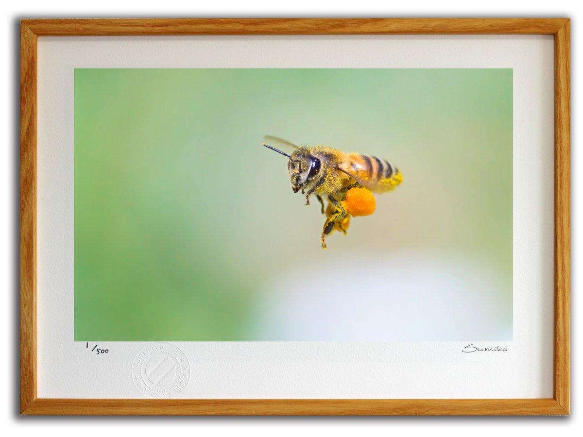 【版画 絵画】飛行中のミツバチ  (スミコ スコット)/インテリア 壁掛け 額入り アート アートパネル アートフレ…