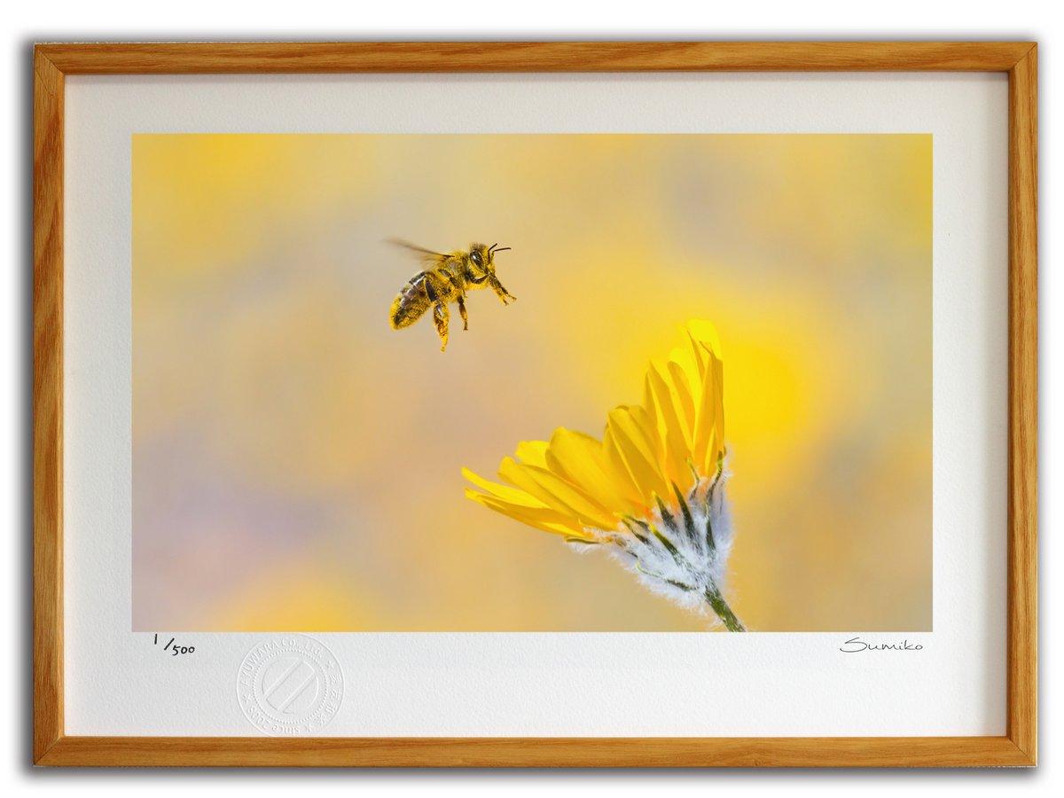 【版画 絵画】ミツバチとデザートサンフラワー(スミコ スコット)/インテリア 壁掛け 額入り アート アートパネル アートフレーム