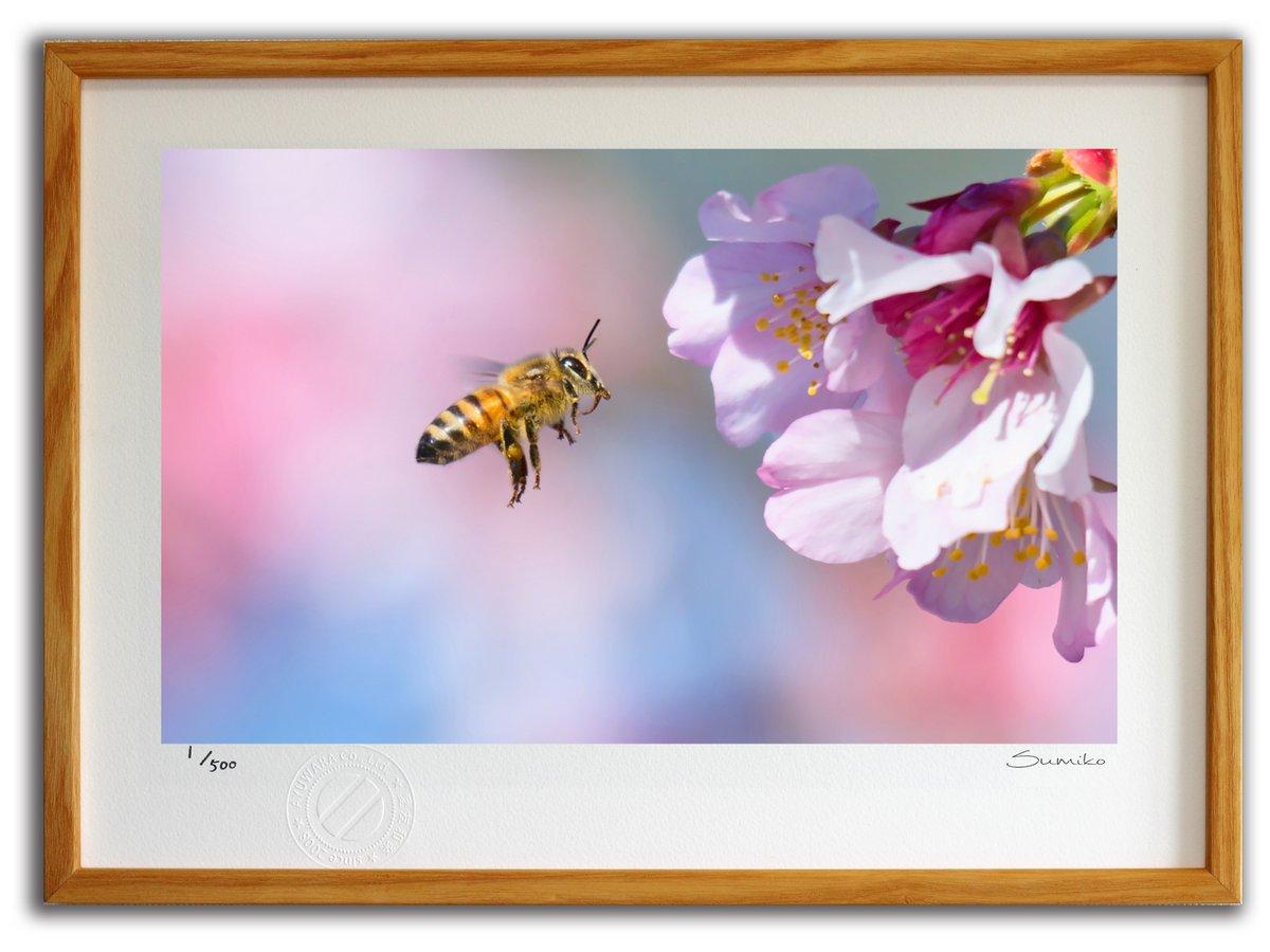 【版画 絵画】ミツバチと桜(スミコ スコット)/インテリア 壁掛け 額入り アート アートパネル アートフレ…