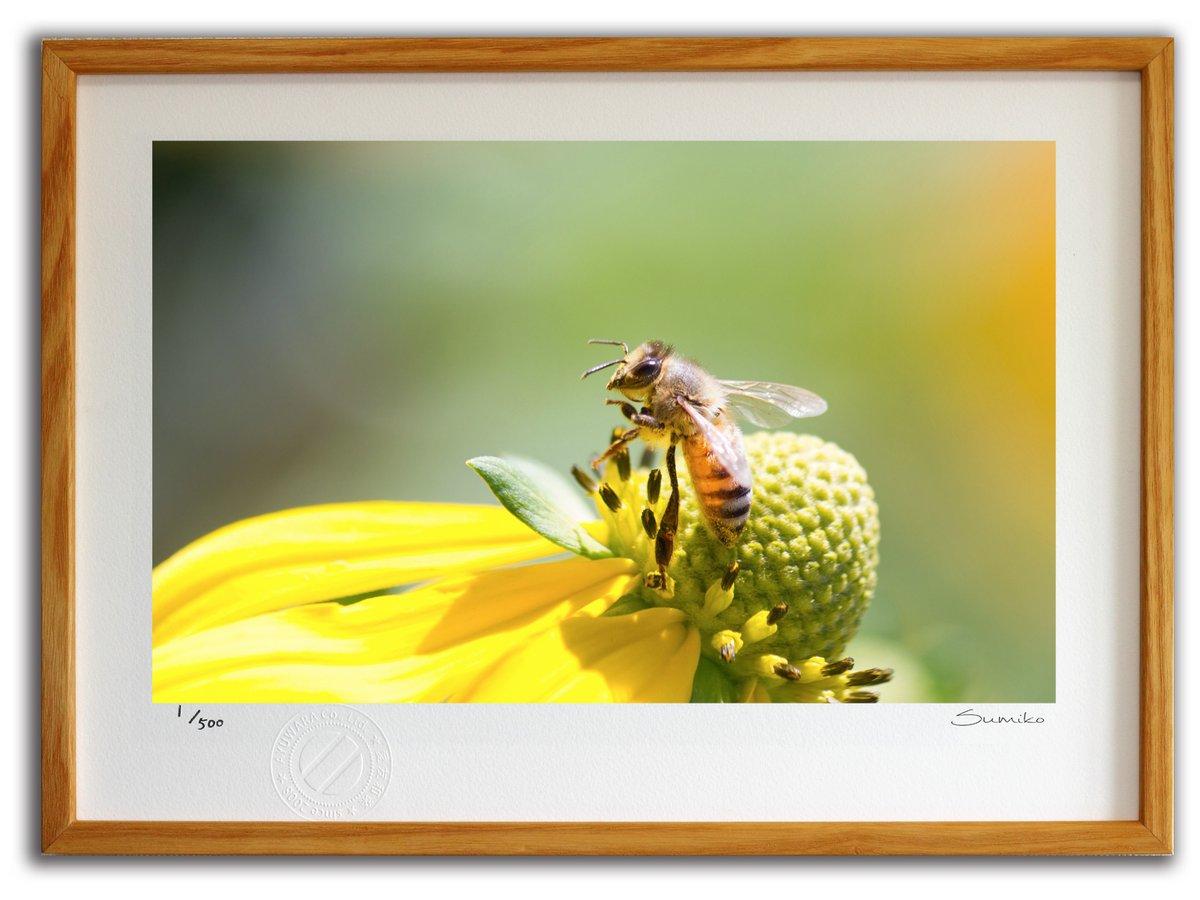 【版画 絵画】ミツバチとデイジー1(スミコ スコット)/インテリア 壁掛け 額入り アート アートパネル アートフレ…
