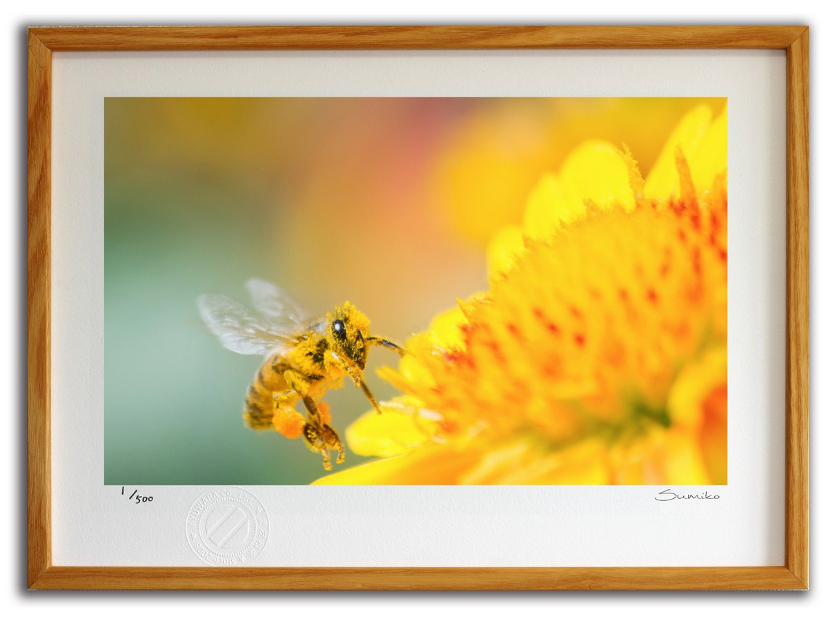 【版画 絵画】ミツバチとデイジー3(スミコ スコット)/インテリア 壁掛け 額入り アート アートパネル アートフレーム