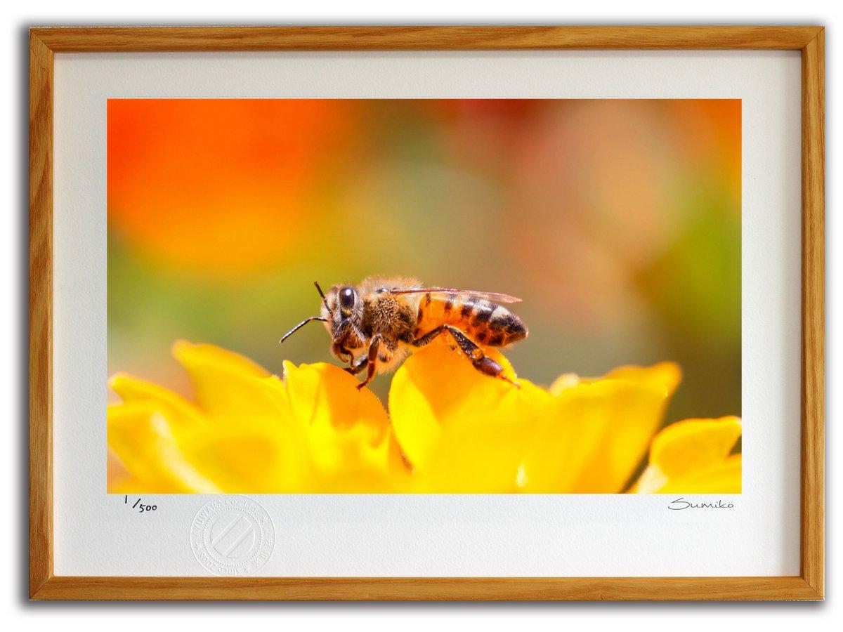 【版画 絵画】恥ずかしがり屋のミツバチ(スミコ スコット)/インテリア 壁掛け 額入り アート アートパネル アートフレ…