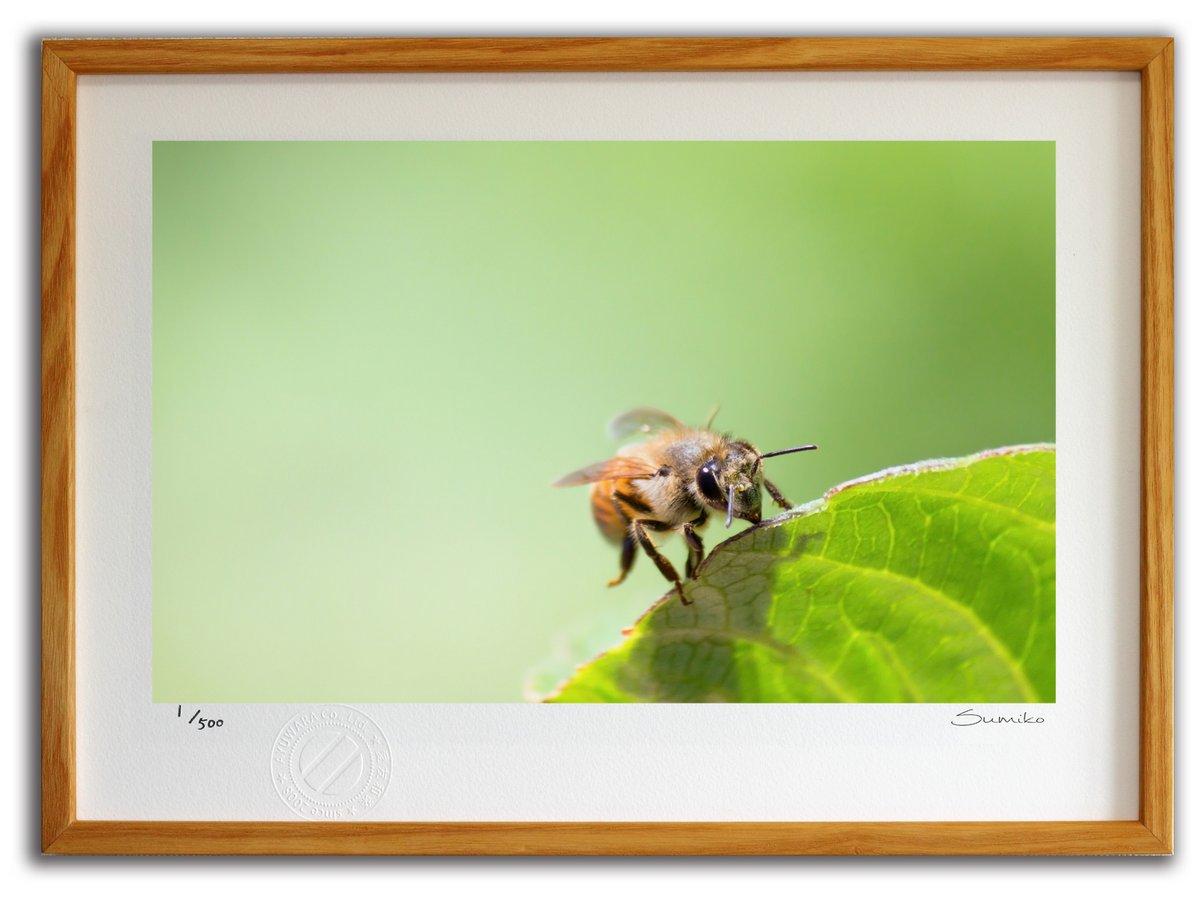 【版画 絵画】葉っぱの上のミツバチ(スミコ スコット)/インテリア 壁掛け 額入り アート アートパネル アートフレーム