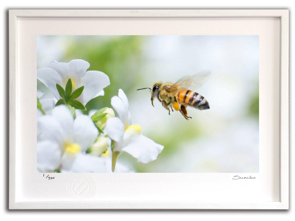 【版画 絵画】ミツバチと白いネメシア(スミコ スコット)/インテリア 壁掛け 額入り アート アートパネル アートフレーム