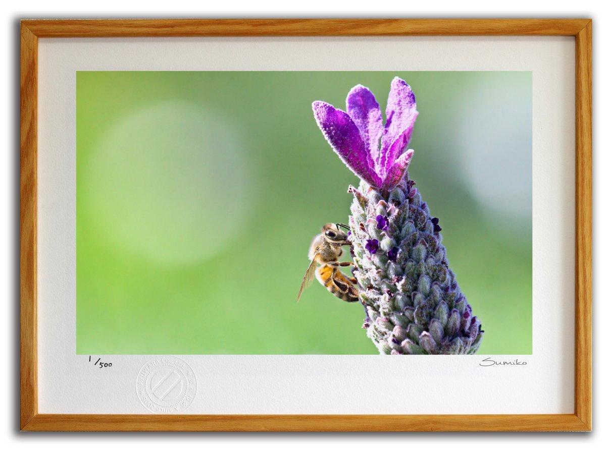 【版画 絵画】ミツバチとラベンダー1(スミコ スコット)/インテリア 壁掛け 額入り アート アートパネル アートフレーム