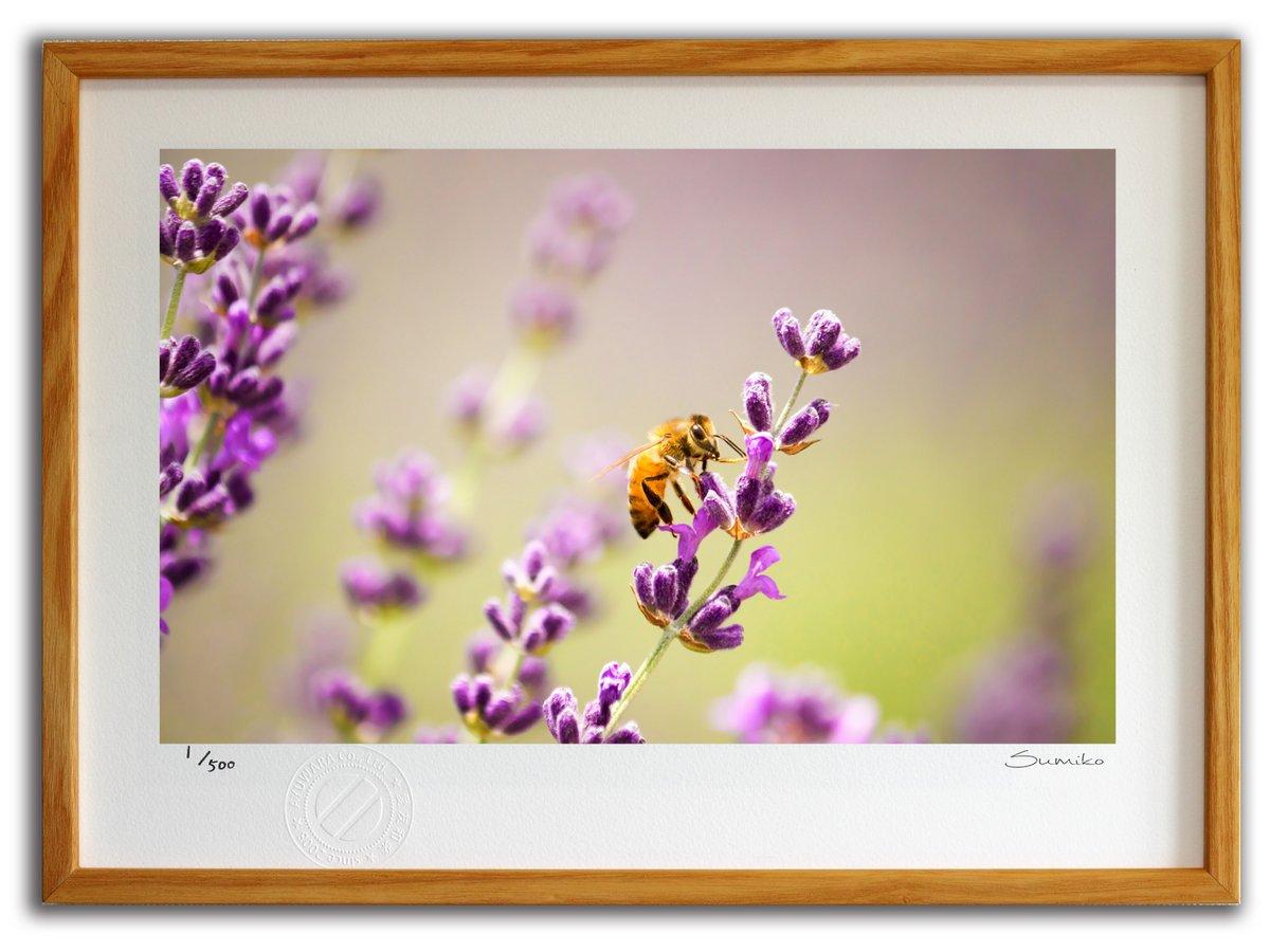 【版画 絵画】ミツバチとラベンダー2(スミコ スコット)/インテリア 壁掛け 額入り アート アートパネル アートフレ…