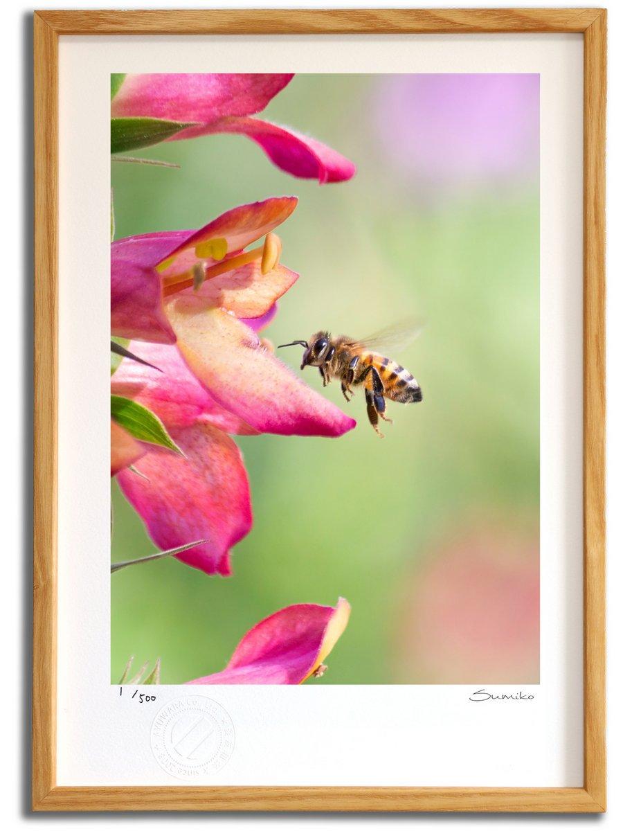 【版画 絵画】ミツバチとフォックスグローブ(スミコ スコット)/インテリア 壁掛け 額入り アート アートパネル アートフレ…