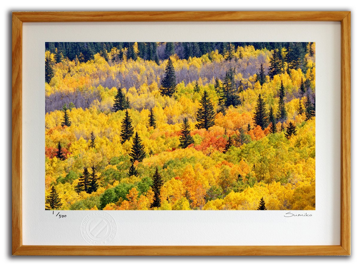 【版画 絵画】ニューメキシコの紅葉(スミコ スコット)/インテリア 壁掛け 額入り アート アートパネル アートフレ…